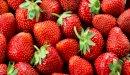 طرق زراعة الفراولة