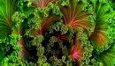 الفوائد الصحية لنبات الكالي