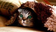 معلومات عن قطط