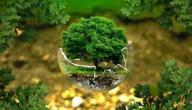 المحافظة على الطبيعة