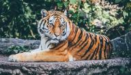 أقوى حيوانات مفترسة في العالم