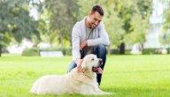 كيف تجعل كلبك يحبك