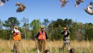 طرق صيد العصافير