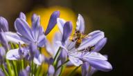 فوائد عسل الزهور
