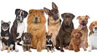 ما انواع الكلاب