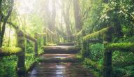 مفهوم النظام البيئي
