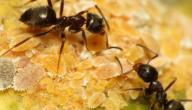 ما تفسير النمل في المنام