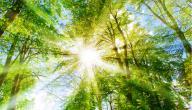 رؤية نور في المنام