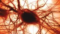 ما علاج نقص الصفائح الدموية