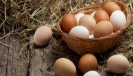 ما تفسير البيض في المنام