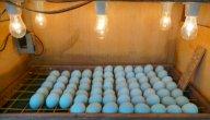 طريقة صنع فقاسة بيض اوتوماتيك