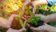 مفهوم التربية البيئية