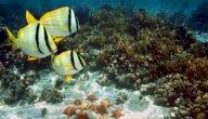 بحث عن عالم البحار