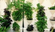 علاج زيادة نشاط الغدة الدرقية بالاعشاب