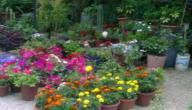 من انواع الزهور