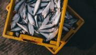 طرق صيد السمك من الشاطئ