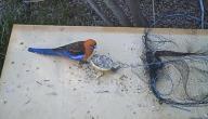 كيف تصنع مصيدة طيور