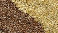 ما هي فوائد بذرة الكتان واضرارها