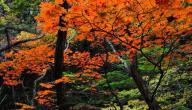 ماذا يحدث في فصل الخريف