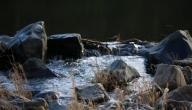 بحث عن اسباب تلوث نهر النيل