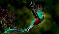 طيور نادرة في العالم