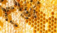 مم يصنع النحل خليته