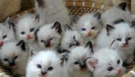 عدد ساعات نوم القطط