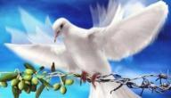 مفهوم السلم والسلام
