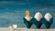 طريقة تفقيس بيض الدجاج