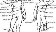 نقاط ضعف جسم الانسان