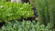 أعشاب لزيادة الخصوبة