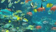أنواع السمك للاكل