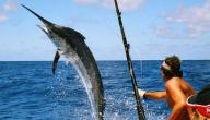 الصيد على الشاطئ