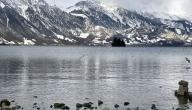 بحيرة ادكو