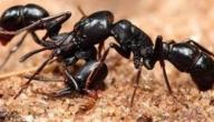 اسرار عالم النمل
