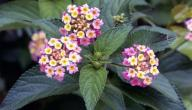 أسماء نباتات تتكاثر بالبذور