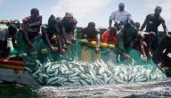 الصيد في موريتانيا