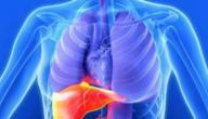المحافظة على الكبد