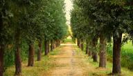 تاريخ يوم الشجرة
