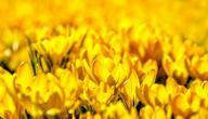 على ماذا يدل اللون الاصفر
