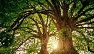 عيد الشجرة