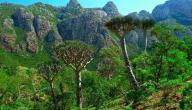 أين تقع جزيرة سقطرى؟
