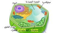 بحث عن تركيب الخلية ووظائفها