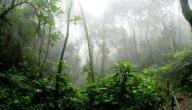 أين توجد غابة الامازون