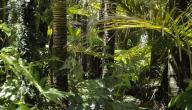 بحث غابة الأمازون