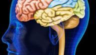 الفرق بين المخ والمخيخ