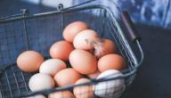 وصفة البيض للوجه