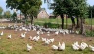 كل ما تود معرفته حول إنشاء مزرعة دواجن