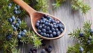 تعرف على أبرز فوائد نبات العرعر لصحتك
