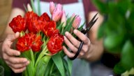 تعلم فن تنسيق الورود